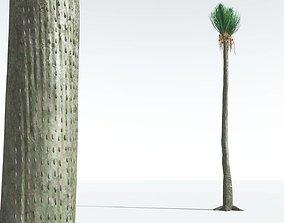 EVERYPlant Ovate Sigillaria 10 --18 Models-- 3D