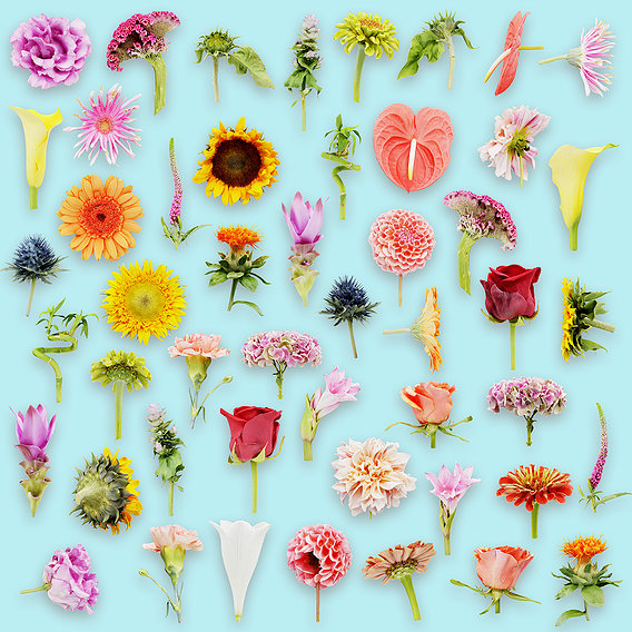 The Ultimate Flower Collection