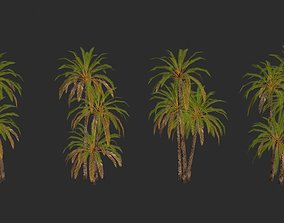 Date Palm Trees Collection 3D asset