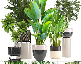 Collection of ornamental plants in pots 3D model