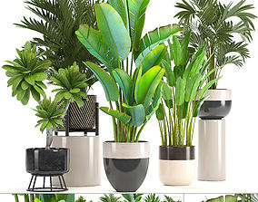 3D Collection of ornamental plants in pots