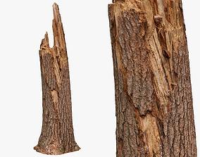 3D asset Broken Tree Trunk - 8K Scan