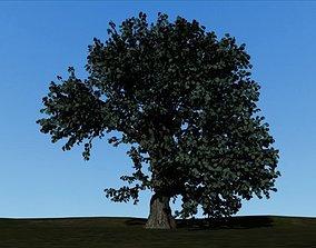 oak tree landscape 3D model