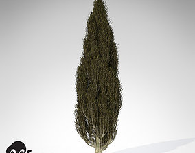 3D XfrogPlants Italian Cypress