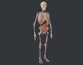 Animated Human Body with circulatory system 3D model