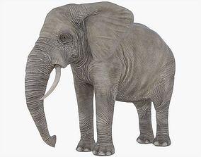 Elephant Rigged 3D