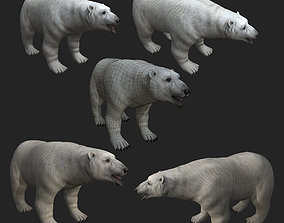 Polar Bear - high quality lowpoly game ready 3D model