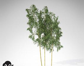 XfrogPlants Hachiku Bamboo 3D model