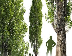 Poplar Populus V1 3D model photogrammetry