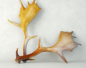 Naturally Shed Moose Antlers 3D