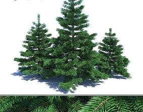 Fir-tree Set 01 3D