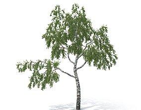 3D model Birch Tree No 1 Summer Version