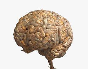 3D model PBR Realistic Human Brain