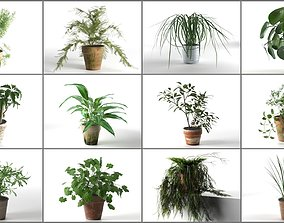 Plants Collection organic 3D model