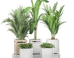 3D Potted plants 118