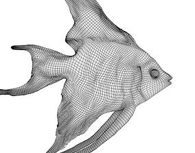 base fish 3D