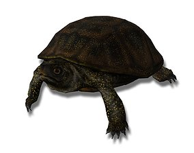 3D model European pond turtle
