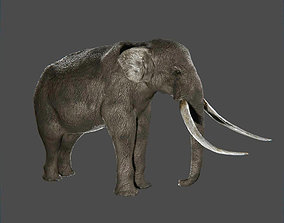 3D asset game-ready Elephant