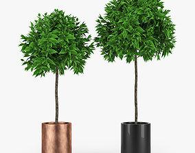 pot interior Plants 3D model