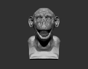 3D model Chimpanzee Head