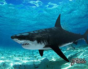 Great white shark tiger 3D model