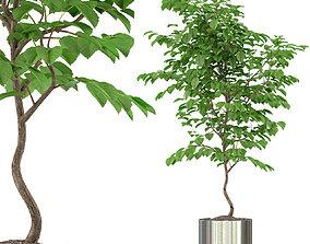 3D Plants collection 245