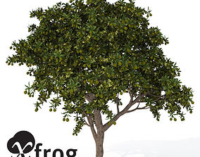 XfrogPlants Mango tree 3D model