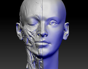 anatomy of the head 3D print model