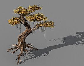 3D model Populus euphratica-poplar-special tree 38