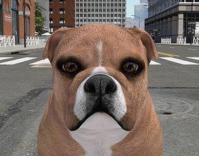 FBEX-011 Dog 3D model