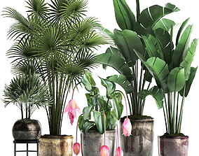Collection Exotic plants 373 3D