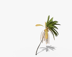 3D asset Coconut Palm Tree 5807