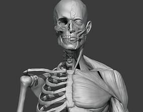 Skeleton 3D Models | CGTrader