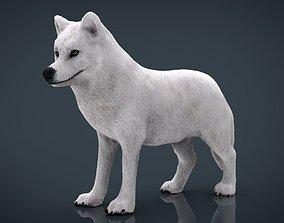 Artic Wolf 3D model