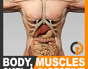 3D model Human Male Body Muscular Digestive System and 2
