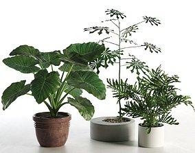 Plants in Pots 3D model ceramic