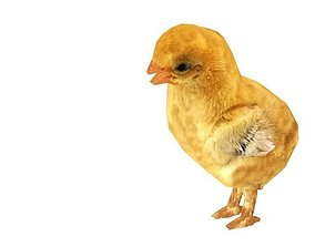 Animated Rigged Chick 3D asset