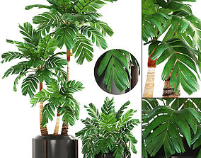 3D model Collection of plants Palms