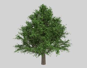 3D model OAK WITH PARTICLE SYSTEM