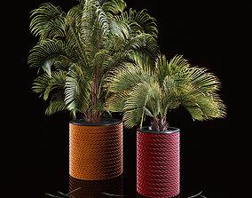 Palms 3D bark