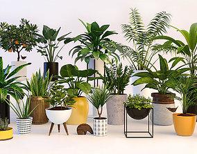 Plants pot bush 3D model