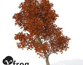 XfrogPlants Autumn Red Oak 3D model