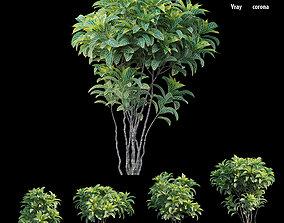 Croton plant set 04 3D model lanscape