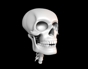 Skull 3D asset game-ready character