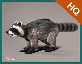 Raccoon 3d model Hair Farm Fur