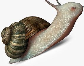 Realistic Snail 3D