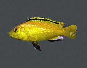 FISH-003 3D model