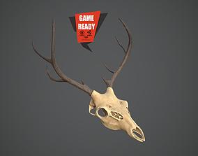 3D asset SKULL ANIMAL Pbr Game Ready