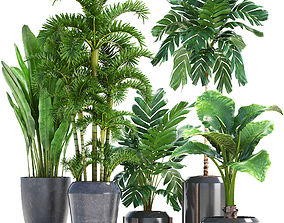 3D Collection Exotic plants in pots
