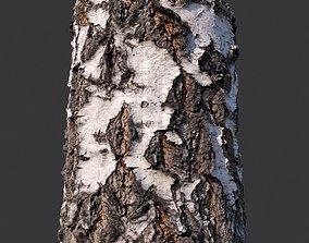 3D model Birch Bark Material